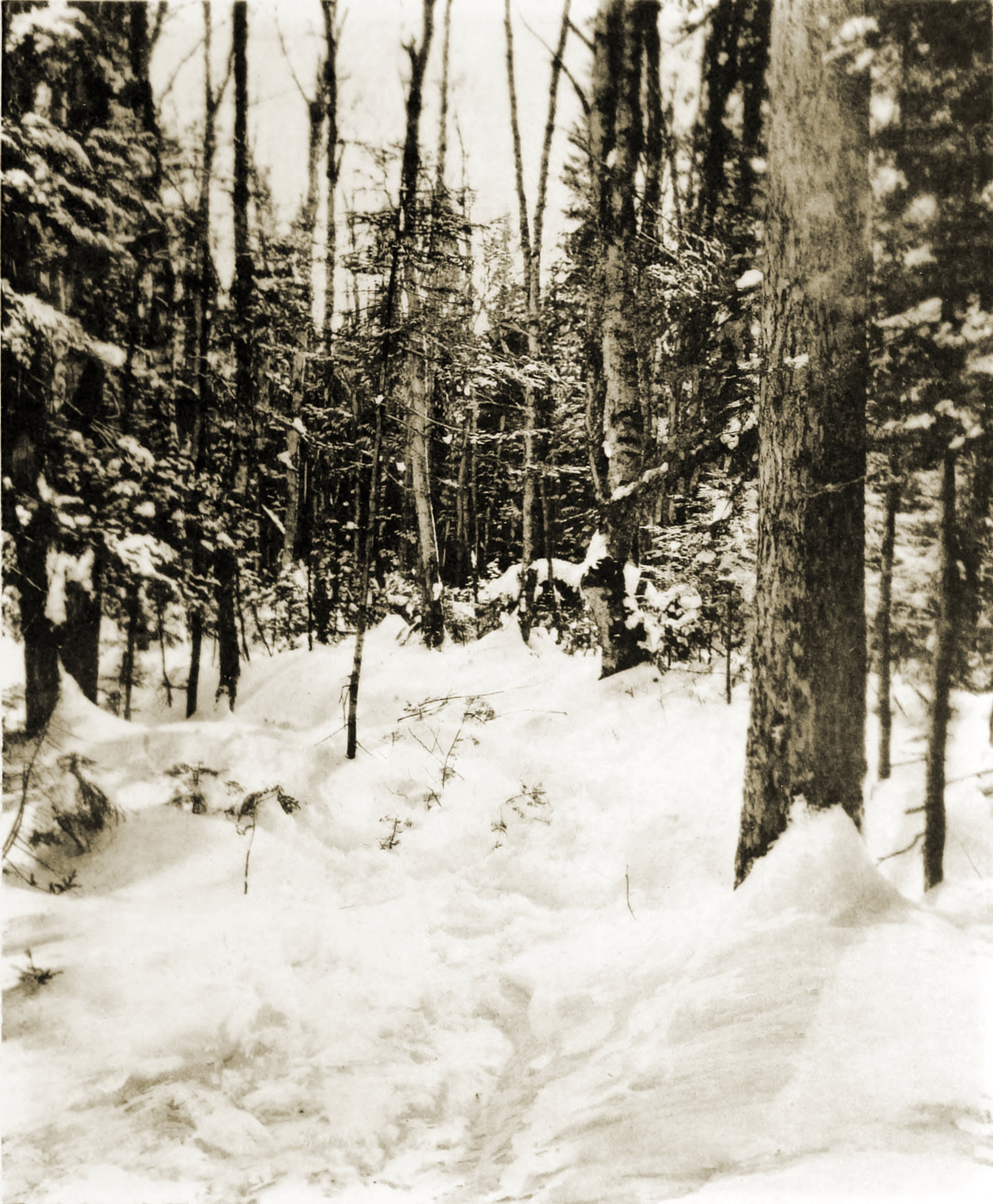 A Forest in Winter by William Sumner Briggs 1892