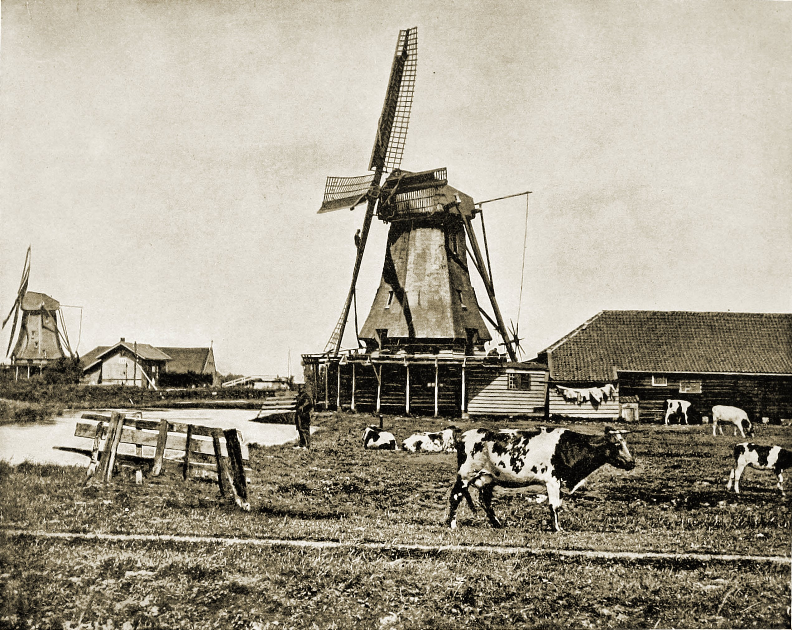 Dutch Windmills Netherlands About 1892 Pastpictures Org