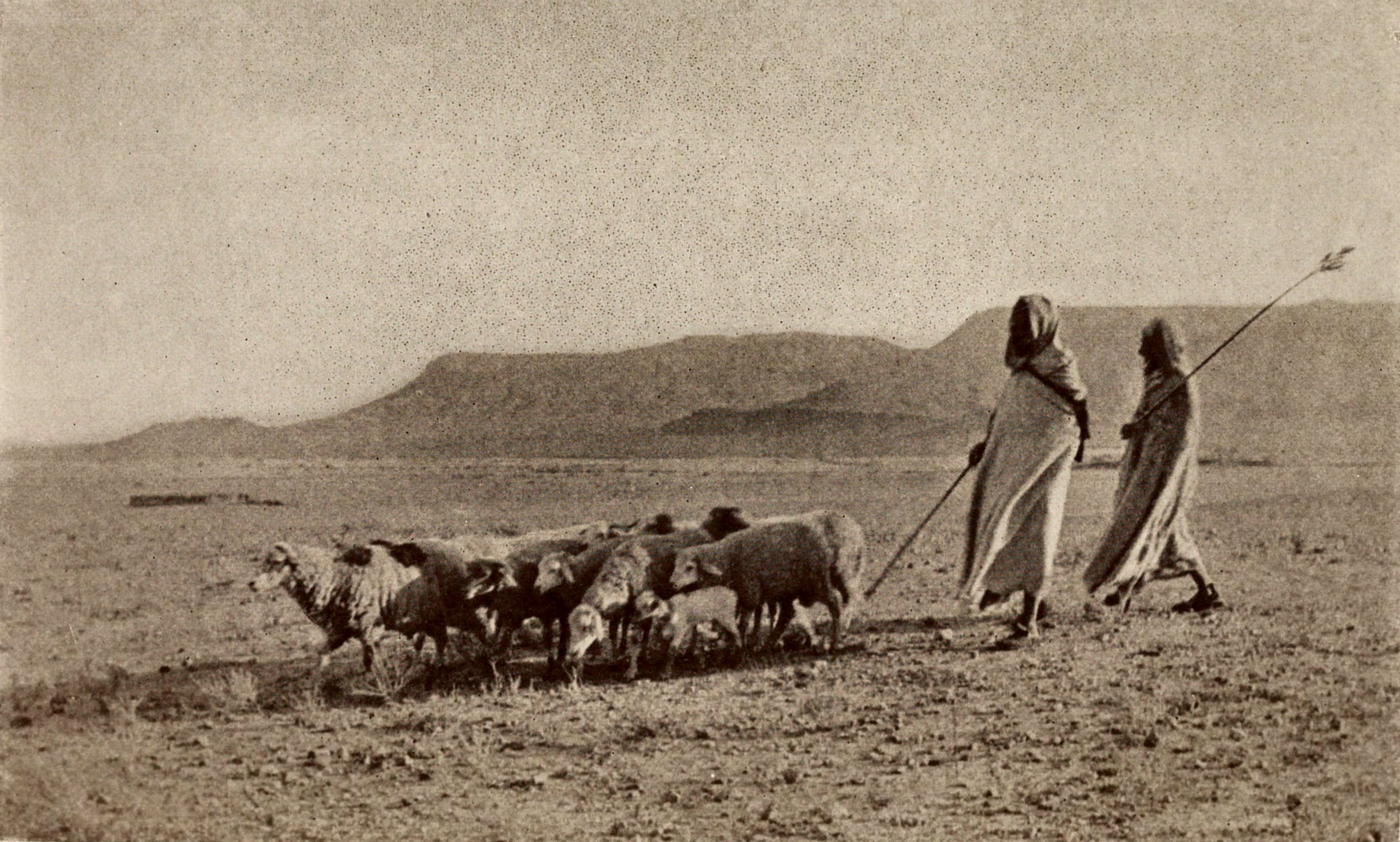 An Algerian pastoral by Louis J. Steele about 1923