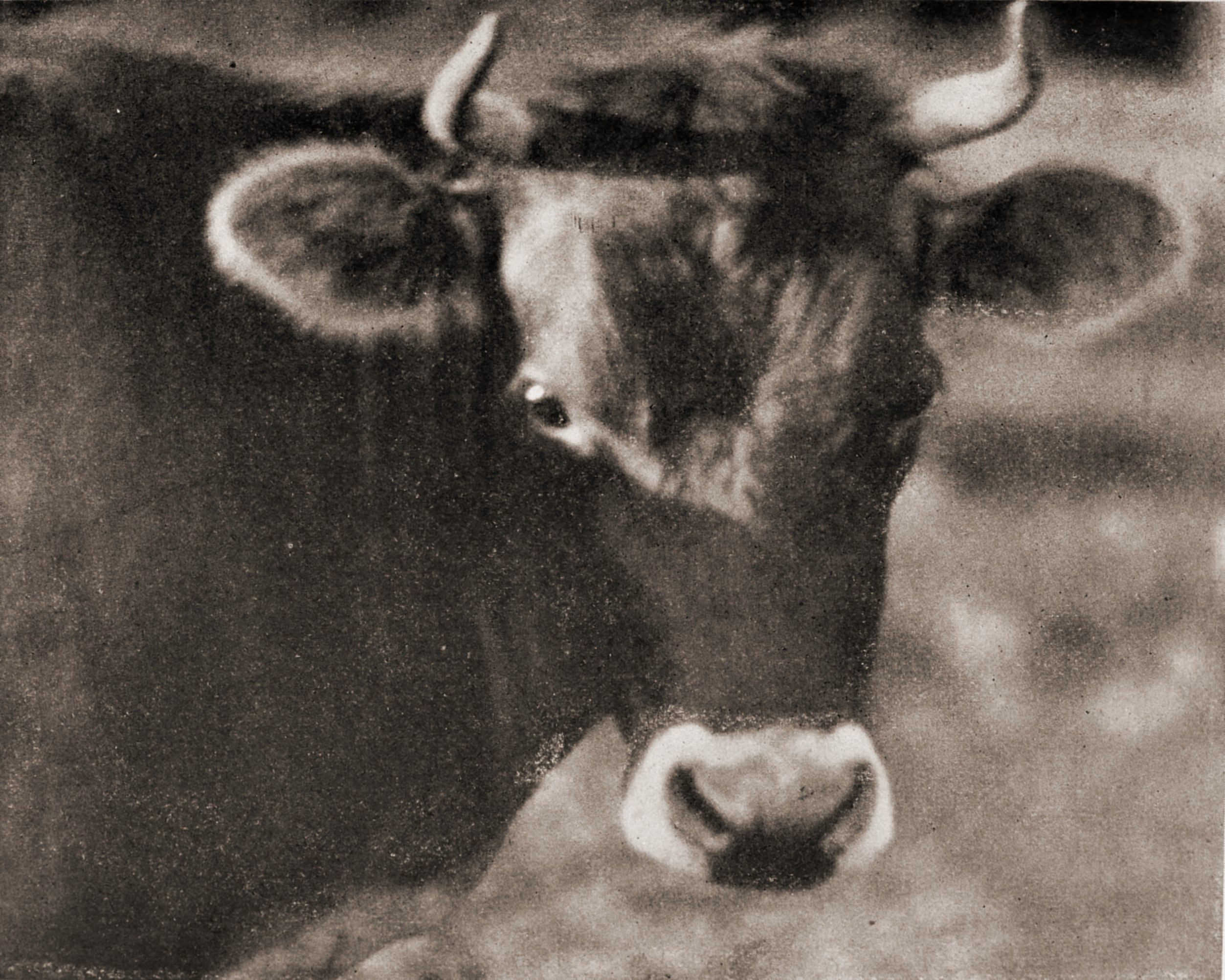 Pride of the ranch by Louis Fleckenstein about 1923