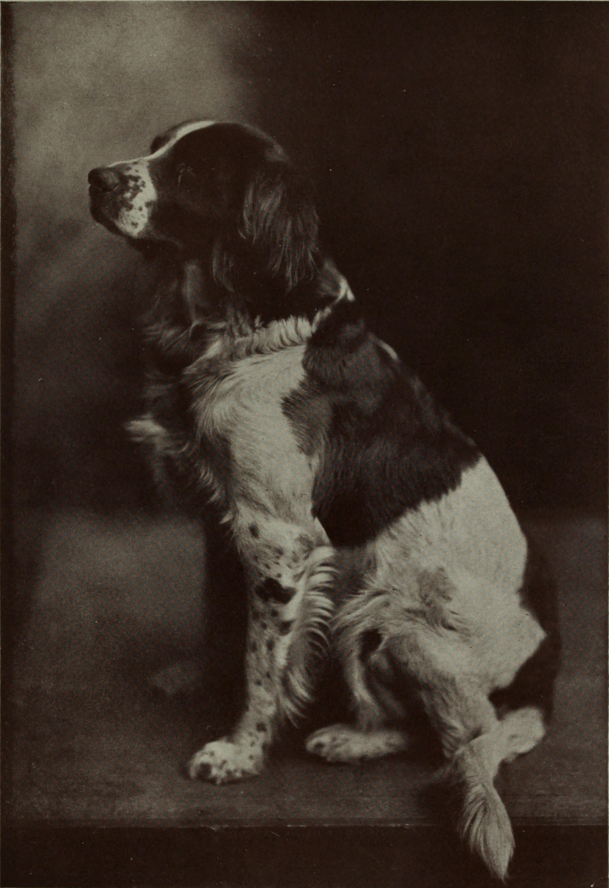 A dog by Belle Johnson about 1908