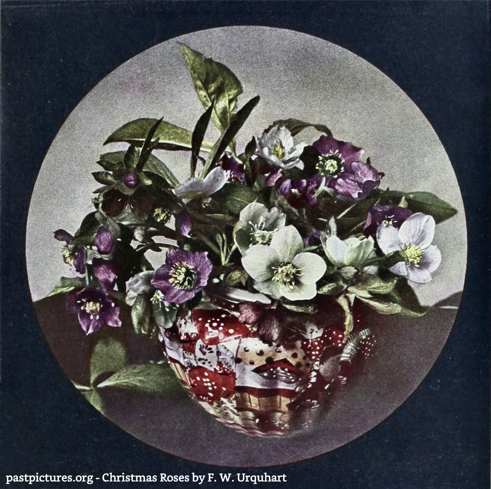 Christmas Roses by F. W. Urquhart about 1908