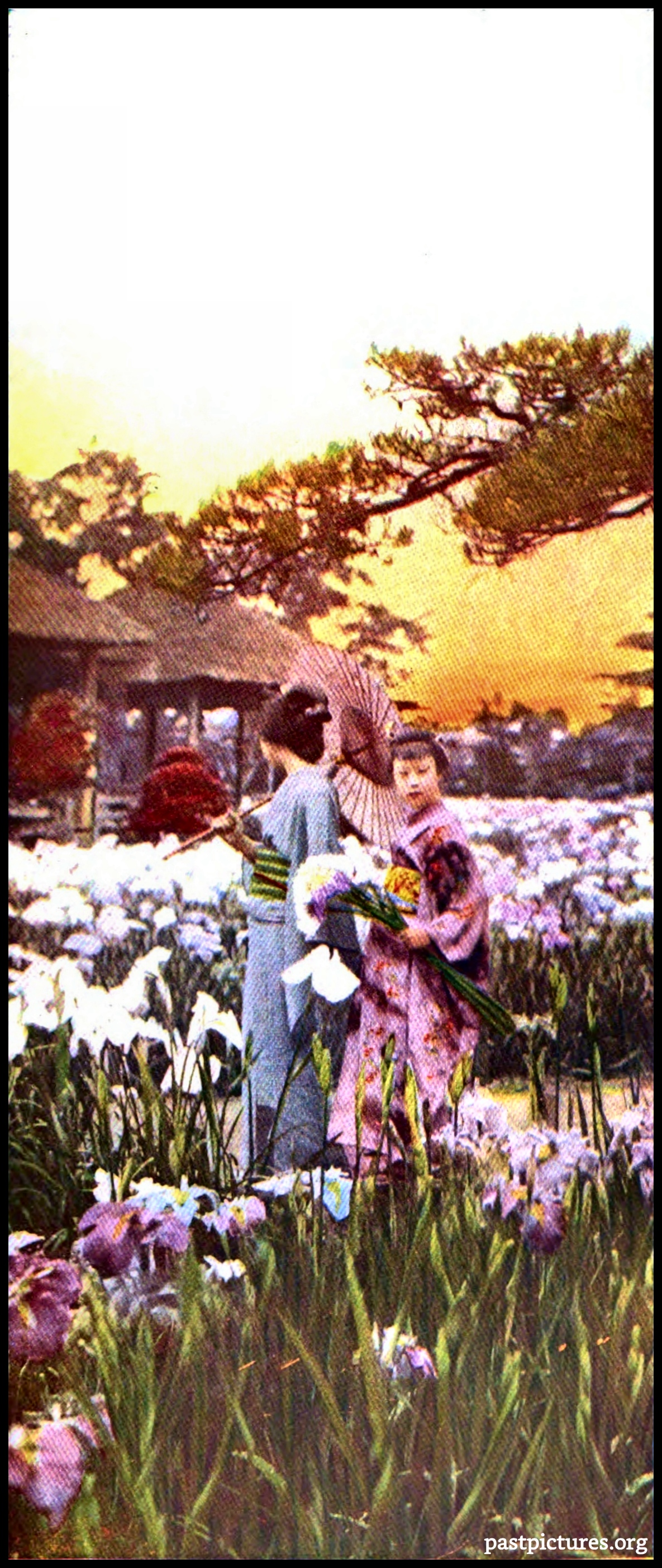 Home of the Japanese Iris about 1905
